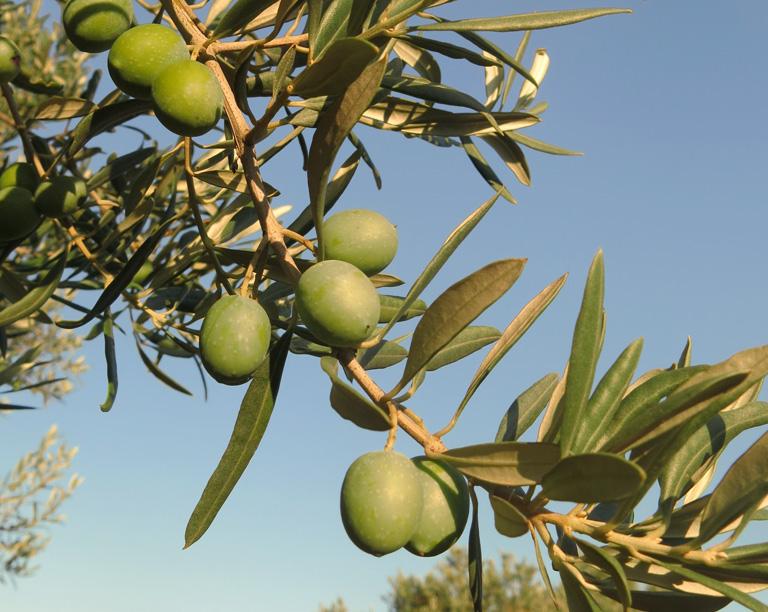 natürliche Seife aus Olivenöl Provence